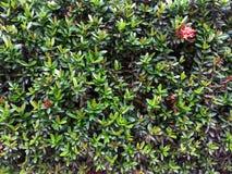 Gardens. Green garden my home Stock Photo