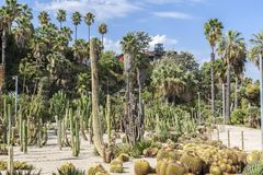 Gardens, jardins Mossen Costa i LLobera, specialized in cactus,. Montjuic park, Barcelona. Spain Royalty Free Stock Photos