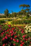 Gardens at Mission Park, in Santa Barbara, California. Royalty Free Stock Photo