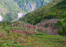 Gardens in the mountains at New Guinea Stock Photography