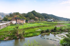 gardens, rice paddy, tea plantation in Chengyang Royalty Free Stock Image