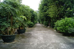 Gardens and roads Royalty Free Stock Photography