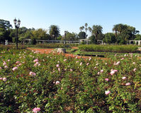 Gardens of roses. Buenos Aires, Argentina. Royalty Free Stock Photos