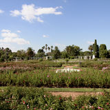 Gardens of roses. Landscape. Buenos Aires, Argentina. Royalty Free Stock Photography