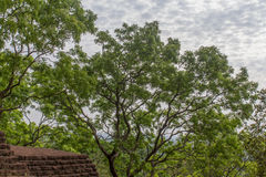 The gardens of Sigiriya Royalty Free Stock Photos