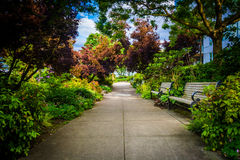 Gardens at the South Waterfront Park in Portland  Royalty Free Stock Images
