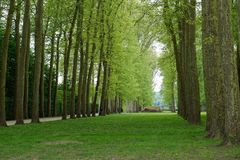 The gardens of Versailles. The gardens at Versailles Chateu in Paris France Stock Photography