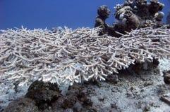 Garder subaquático Imagem de Stock