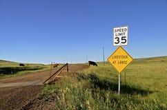 Gardes et routes de bétail Photographie stock libre de droits