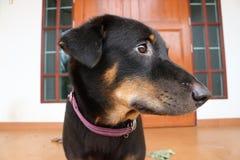 The gardian dog. Stock Images
