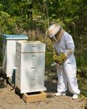 Gardien d'abeille photo libre de droits
