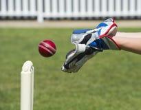 Gardien de guichet de cricket Photos libres de droits