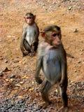 Gardien de singe Images libres de droits