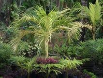 Gardn landscap arkivfoton