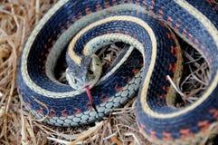 gardner опасности воспринимая змейку стоковая фотография
