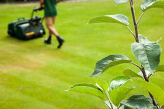 Gardner mowing lawn. Focus on the foreground foliage with a gardner mowing a lawn in the background; with copy space Stock Images