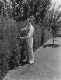 Gardner poda arbustos Foto de archivo