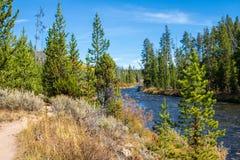 Gardner River in het Nationale Park van Yellowstone stock foto's