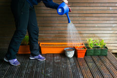 Gardner watering plants Royalty Free Stock Photos