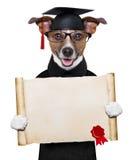 Garduate dog stock images