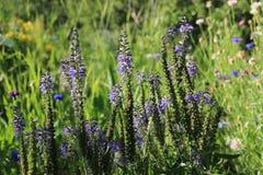 Garen flowers Stock Photography