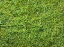 Garez avec des fleurs et des herbes décoratives - vue supérieure Image stock