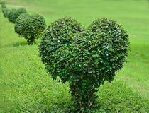 Garez avec la pelouse verte et amour rapetissé d'arbre Photos libres de droits