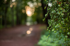 Garez dans la lumière de coucher du soleil, fond blurкed naturel Photographie stock libre de droits