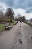 Garez le chemin avec le waitin de corneille et d'écureuil de vol dans la ligne par le banc photos libres de droits