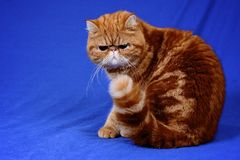 garfield Fotografia de Stock Royalty Free