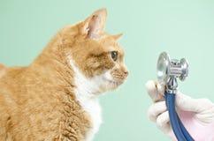 Garfield ao veterinário Imagem de Stock