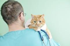 Garfield ao veterinário Imagem de Stock Royalty Free