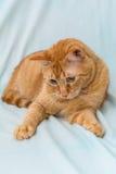 Garfield, das auf dem Sofa spielt lizenzfreies stockfoto