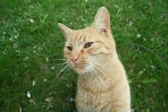 Garfield dispettoso Immagine Stock