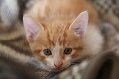 Garfield el gato Imágenes de archivo libres de regalías