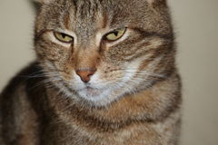 Garfield Face Stock Photo