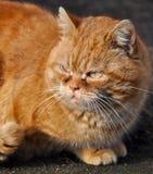 Garfield-Katze stockbild