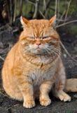 Garfield-Katze stockfotografie