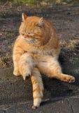 Garfield-Katze lizenzfreies stockfoto