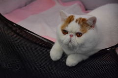 Garfield Royalty Free Stock Photo
