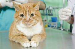 Garfield to the vet Stock Photo