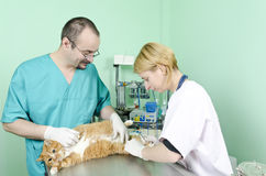 Garfield to the vet Stock Photo