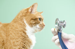 Garfield to the vet Stock Image
