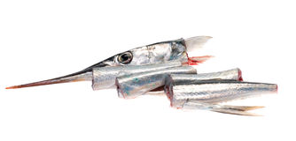 The Garfish Royalty Free Stock Photography