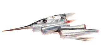 garfish Royaltyfri Fotografi