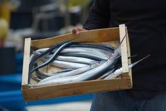 garfish Immagini Stock Libere da Diritti