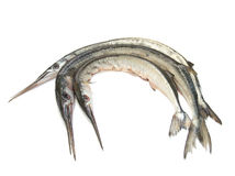 Garfish (Belone belone) raw Royalty Free Stock Images