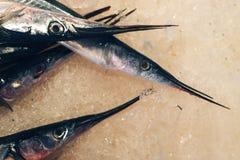 Garfish på marknaden royaltyfri foto