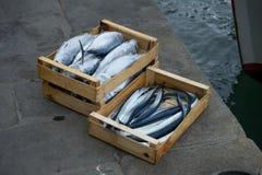 Garfish und springende Fische Stockfotos