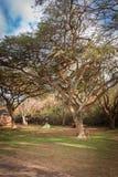 Garganta África do Sul do rio de Blyde Fotografia de Stock